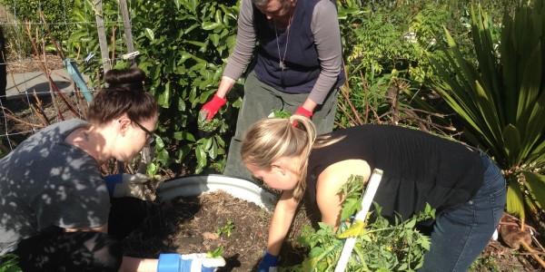 Garden workshop 29 July 2
